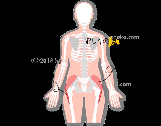 お尻と脚の筋肉