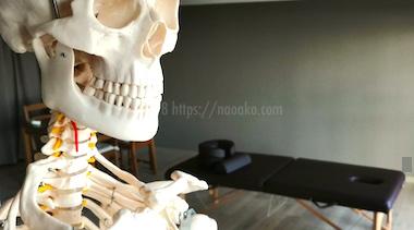 人体の説明に用いる骨格模型